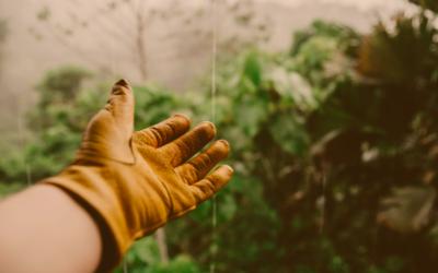Quels risques professionnels pour les jardiniers et les paysagistes ?