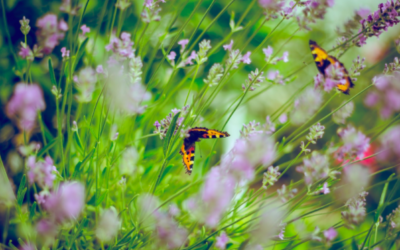 Aménagement de jardin en pente : comment faire ?